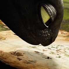""" Toothless' nose appreciation gif. """
