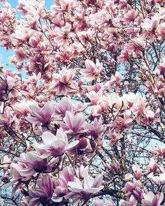 """Mi piace"": 1,124, commenti: 18 - Cristina Surdu (@cristinasurdu) su Instagram: ""Hello #spring 😍😍😍😍😍😍 #flowers"""