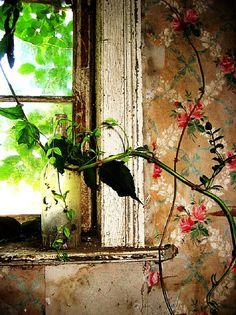 wonderful old rose trellis wallpaper in abandoned house.
