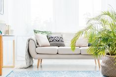 Plant next to beige sofa with bright cushions in living room with blue carpet Love Wellness, Natural Air Purifier, Living Room Plants, Beige Sofa, Living Room Photos, Blue Carpet, Houseplants, Indoor Plants, Love Seat