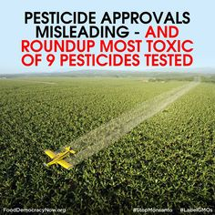 Pesticide formulations as sold and used are up to 1000 times more toxic than the isolated substance that is tested and evaluated for safety, and Roundup is the most toxic of herbicides and insecticides tested, shows a new study led by Prof GE Seralini. More here: http://gmwatch.eu/index.php/news/archive/2014/15279-pesticide-approvals-misleading-and-roundup-most-toxic-of-9-pesticides-tested #Pesticides #Roundup #toxic