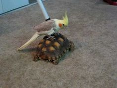 Hitching a ride.....