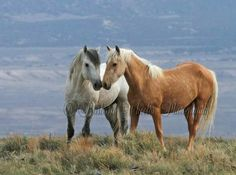 Wild And FREE Luv of a Stallion + Mare