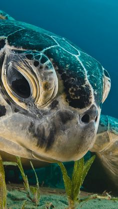 Wallpapers from National Geographic ~ Spanish site ~ sea turtle close-up