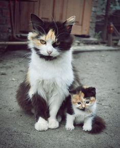 34 ANIMALS WITH THEIR ADORABLE BABY COUNTERPARTS