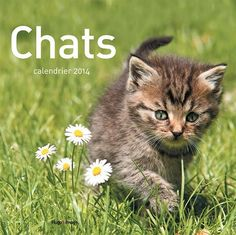Chat Web, Cat Calendar, Animals, Art, Calendar For 2016, Free Books, Cats, Animales, Art Background