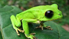 Peru; discoveries set biodiversity record