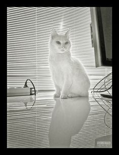 Blind Cat: dieren portretten fotografie animal portraits photography katten cats poezen