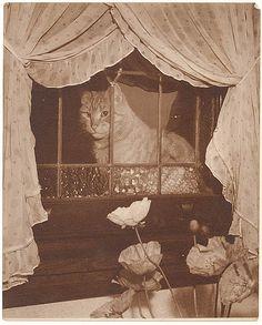 Cat in the window, 1930s