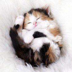 Kitten Sound Asleep