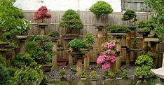 bonsai small garden design ideas asian style