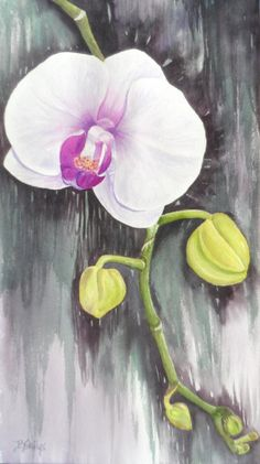 Limited Edition First Orchid in watercolor by PaintingsByBecki, $75.00
