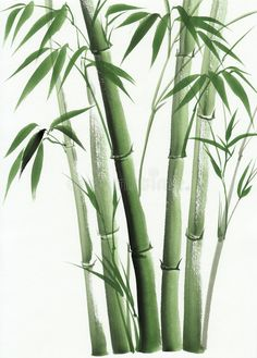 Illustration about Bamboo original watercolor painting. Illustration of stalk, decorative, symbol - 50697668