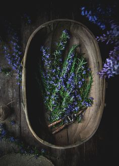 Rosemary Simple Syrup by Eva Kosmas Flores This rosemary simple syrup can be made with either honey or granulated sugar, and adds the most delicious floral and herbal hint to any beverage! #rosemary #simplesyrup #rosemarysimplesyrup #honey #granulatedsugar #spring #floral #herbal #beverage #imbibe #adventuresincooking Rosemary Simple Syrup, Clematis Vine, Ivy Plants, Ivy House, Landscaping Plants, Granulated Sugar, Make It Through, Herb Garden, Herbalism