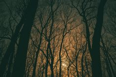Toutes les tailles   Sans titre   Flickr: partage de photos!