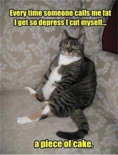 Fat cat. #LOLcats #Cats