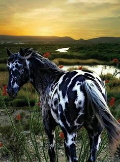Gorgeous large spotted horse in the desert at sunset by the stream. (95) Simply Horses - Photos