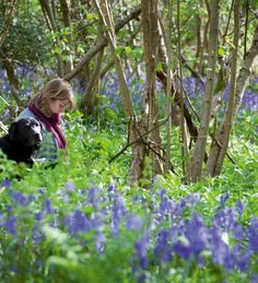 Plant these native bluebells in any collection of trees and shrubs and it makes them look like they've been there forever. This is the true native British bluebell not the chunkier, unscented Spanish garden form.