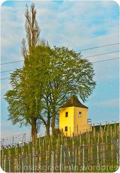 Frühling im Markgräflerland – Rebberge, Kirschblüten und Tulpenfeld