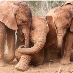 """standavis:  """"Love. Family. Care. #elephant #animal #love #nature"""" by @goodelephantco on Instagram http://ift.tt/1HlcSnK"""