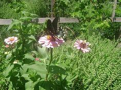 TSG: Backyard Biodiversity For Beginners Part 2 - Soil