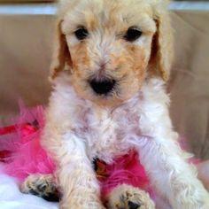 cute stinking little puppy!