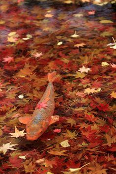 水面にビッチリと落ち葉が落ちてました。 なんとも美しい景色だったので撮影しました。