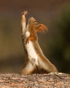 Прийдется слегка попотеть, пока орешек заработаешь... squirrel dance