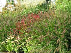 Grassen – vaste plant combi Molinia pennisetum, persicaria, sedum, maclaeya
