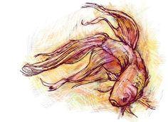 Pez naranja  Tomado de: http://www.imagespalace.com *Reptiliam Visual es una agencia de publicidad siempre a la vanguardia, conoce las ventajas que te ofrecemos. www.reptiliamvisual.com.co