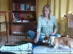 How to Train Puppies : How to Crate Train Your Puppy