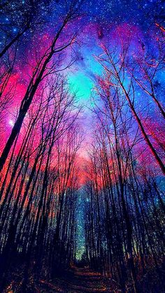 Tall trees and night sky