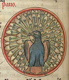 Medieval Bestiary : Peacock Gallery