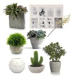 """""""Plant @nc4you"""" by nc4you on Polyvore featuring interior, interiors, interior design, Zuhause, home decor, interior decorating, Crate and Barrel, John-Richard, plant und NC4you"""