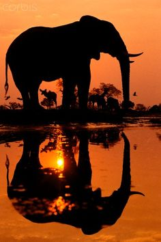 African Elephant. What a great post! We just absolutely love animals. Whether it's a dog, cat, bird, horse, fish, or anything else, animals are awesome! Don't you agree? -- courtesy of www.pawstruck.com