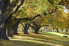Autumn Trees Manawatu River Palmerston North New Zealand Long White Cloud, The Beautiful Country, Autumn Trees, New Zealand, Fantasy, Spaces, Eyes, Live, Photography