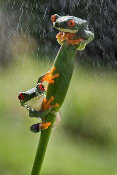 ~~frog friends hangin' by Kutub Uddin~~