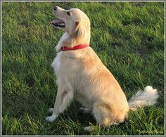 Off Leash Training, Coming When Called Tips    dog training, dog comes when calls, dog training tips, dogs    #dogtraining #dogtrainingtips #dogcomingwhencalled #doghelp