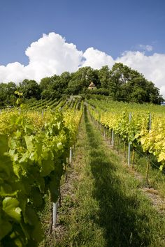 vineyard, Franconia, Germany http://www.fodors.com/community/europe/wineries-in-wurzburg-or-romantic-road.cfm http://www.wuerzburg.de/en/visitors/wine-and-franconian-wine-country/wine-tastingsand-wineries/index.html