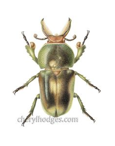 Limited edition Giclee print of a Golden Green Stag Beetle