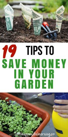 There are lots of great ways to save money in your garden. You can easily spend far more than you could ever gain in the garden, but if you're careful, your vegetable garden can save you tons. Ways To Save Money, Money Saving Tips, Gardening For Beginners, Gardening Tips, Container Gardening, Aquaponics System, Aquaponics Greenhouse, Aquaponics Fish, Hydroponics