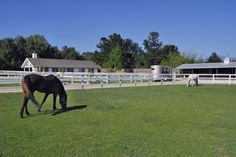 country home with beautiful horses
