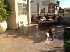 A splash pad for the dog
