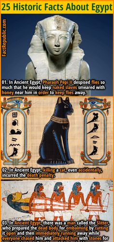Wierd Facts, Wtf Fun Facts, True Facts, History Facts, History Posters, Ancient Egypt History, Facts For Kids, Unbelievable Facts, Mystery Of History