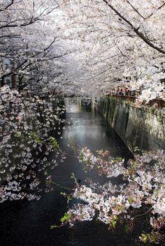 mmm Korea nostalgia 벚꽃