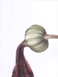 faded Amaryllis detail, in watercolor Watercolor, Detail, Spring, Illustration, Design, Art, Pen And Wash, Art Background, Watercolor Painting