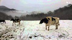 Animales jugando felices en la nieve