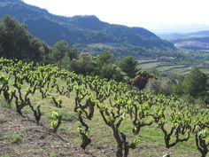 Tokaj Wine Region Historic Cultural Landscape Hungary | Traveling Tour Guide