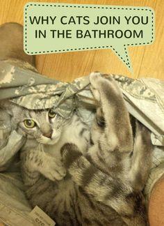 Why Do Cats Come To The Bathroom With You? Why do cats? - Catsincare.com