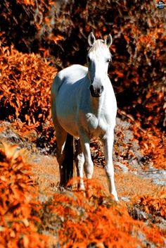 Wild Horses...